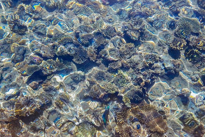 Rochas subaquáticas no mar de turquesa foto de stock