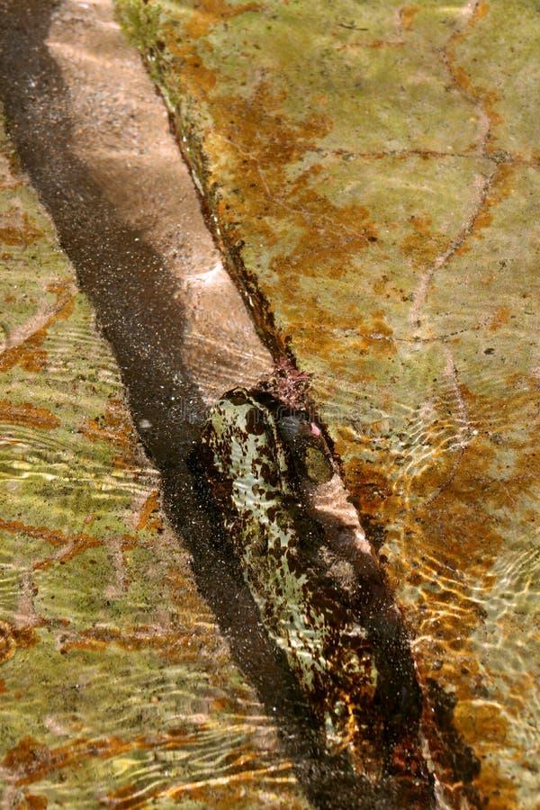 Rochas verdes sob o retrato da água pouco profunda imagem de stock