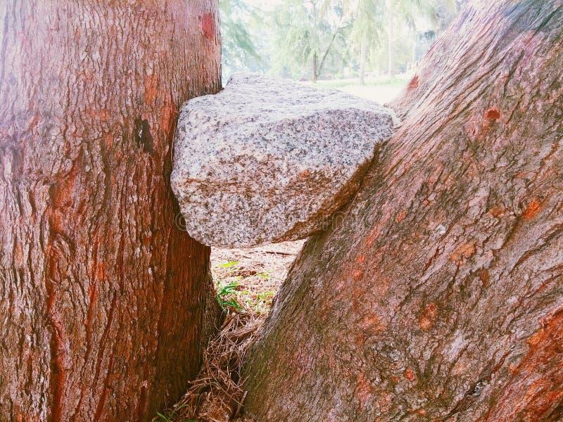 Roche coincée dans l'intervalle des arbres photographie stock libre de droits