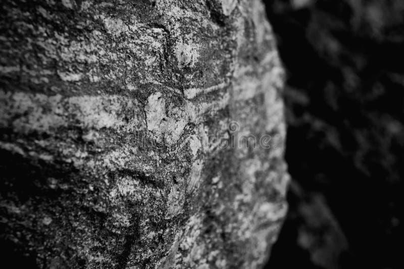 Roche dans les bois photographie stock