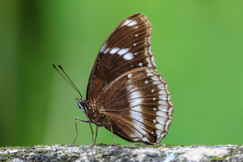 Roche de baiser de papillon photographie stock