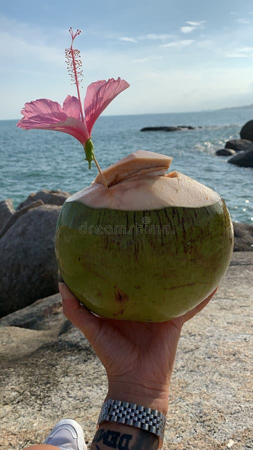 Roche de grand-papa de grand-maman de noix de coco photographie stock libre de droits