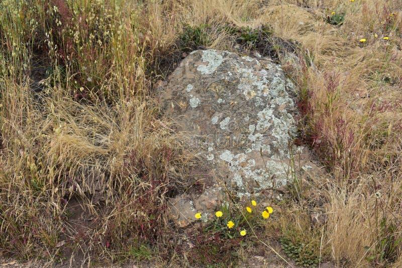 Roche de Greywacke avec le lichen et l'herbe sauvage sur Mt Davidson San Francisco, 2 image libre de droits