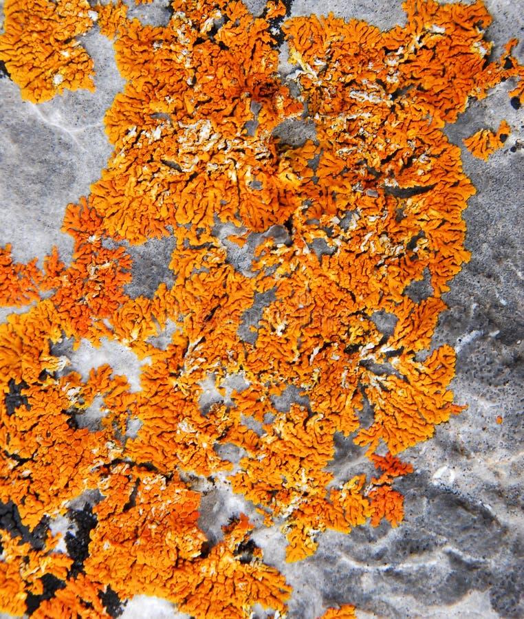 roche de lichen photo stock
