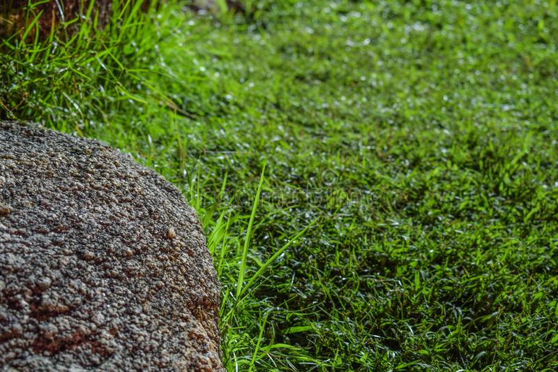 Roche et herbe photographie stock libre de droits
