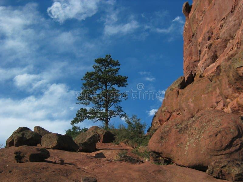 Roche rouge Ampitheater avec le pin image libre de droits