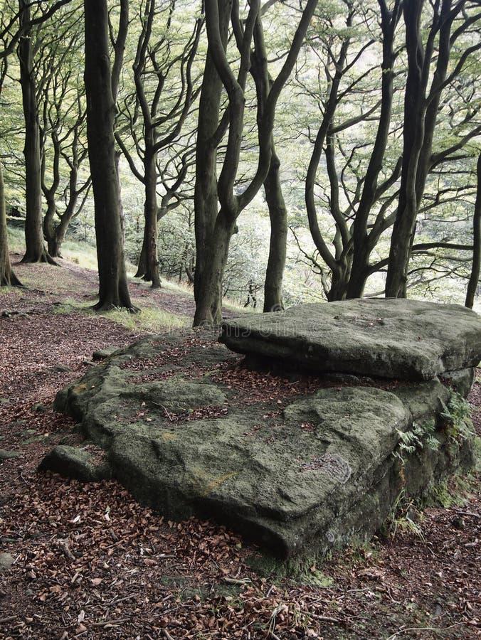 Rocher plat devant un fond de flanc de coteau de forêt avec les arbres de hêtre grands contre la lumière images libres de droits