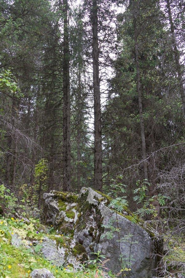 Download Rochers Couverts De La Mousse Dans La Forêt Photo stock - Image du milieux, normal: 77150008