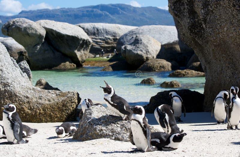 Rochers de colonie de pingouin photos libres de droits