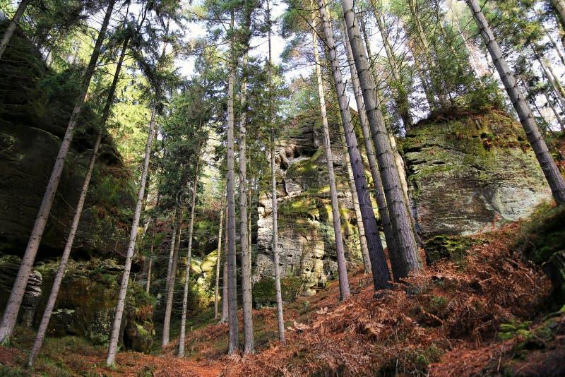 Rochers en forêt, Bohemian Paradise Cesky Raj, République tchèque photos stock