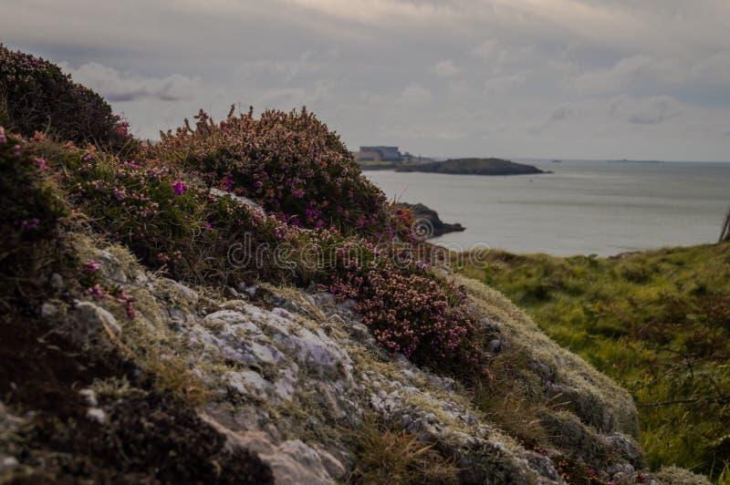Roches blanches couvertes au lichen et à la belle Bell Heather pourpre images libres de droits