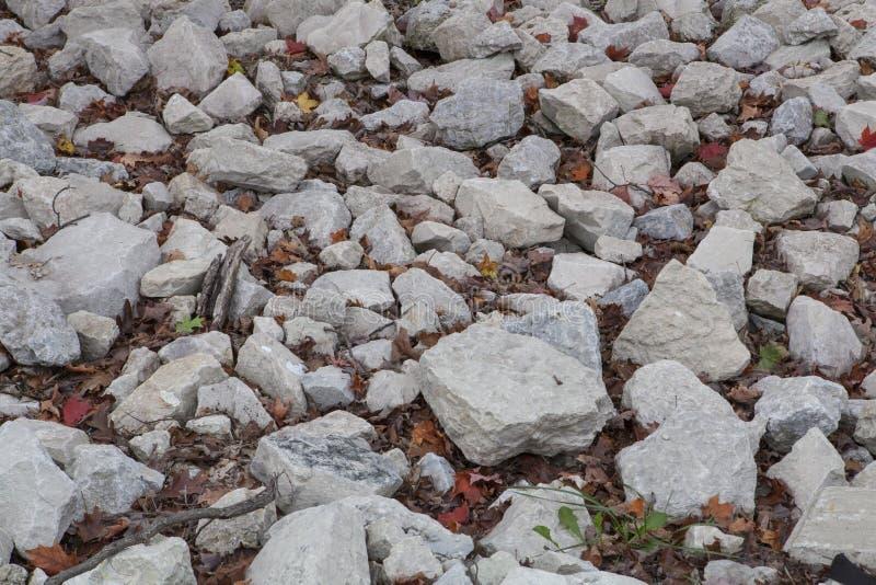 Roches couvrant la terre d'une forêt image libre de droits