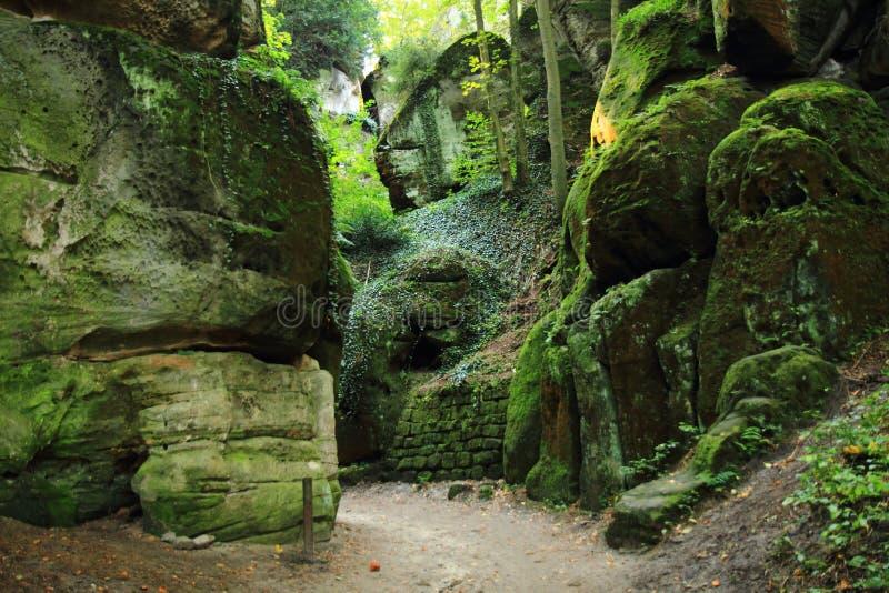 roches dans la forêt verte photo libre de droits