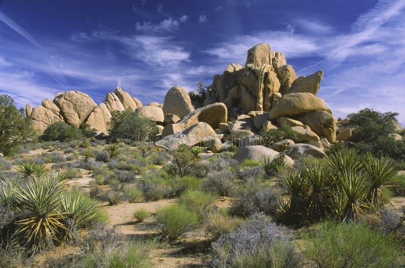 Roches en vallée cachée, stationnement national d'arbre de Joshua image stock