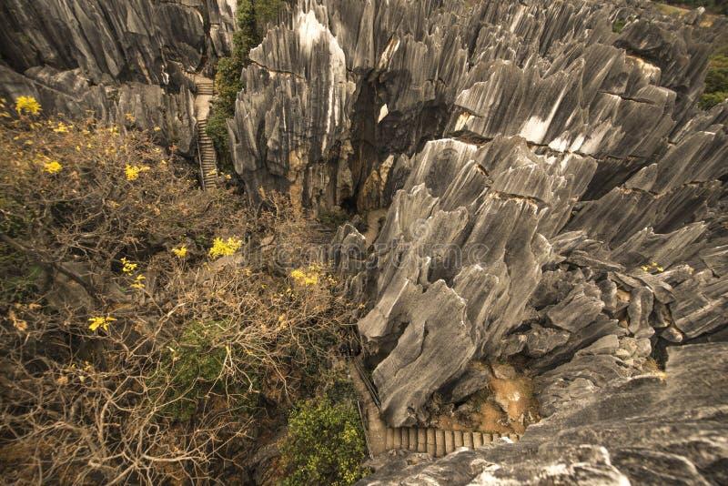 Roches et arbres en pierre de forêt photographie stock