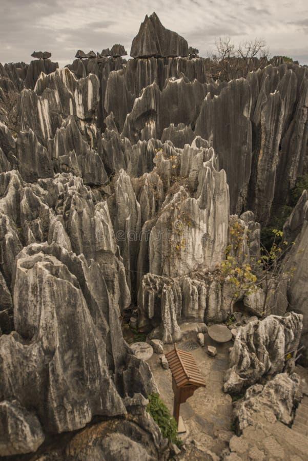 Roches et arbres en pierre 2 de forêt photos libres de droits