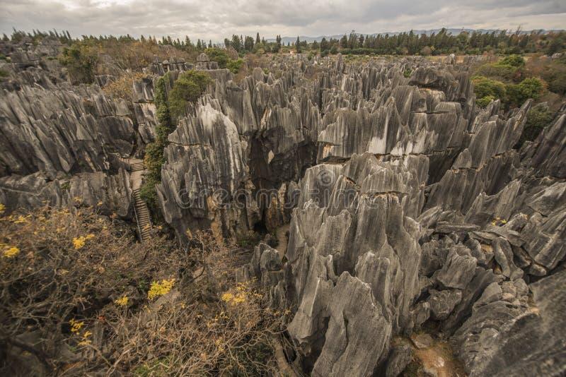 Roches et arbres en pierre 3 de forêt image libre de droits