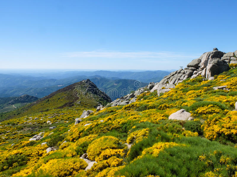 Roches et fleurs de floraison dans les montagnes de Cevennes dans les Frances photos stock