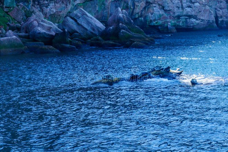 Roches et joints dans Bonaventure Island photographie stock libre de droits