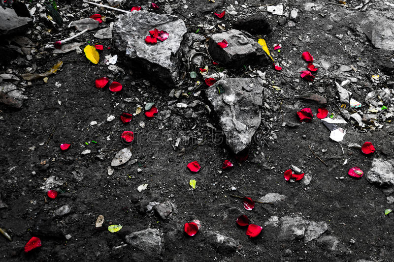 Roches et roses photographie stock