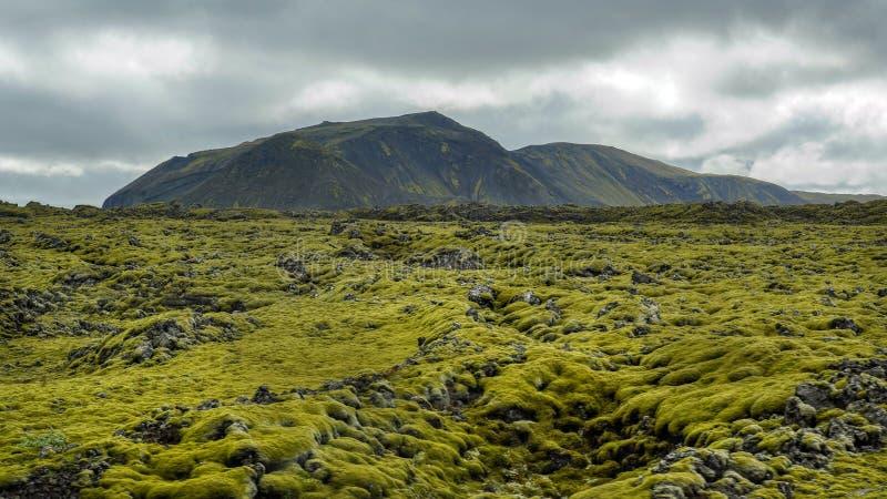 Roches moussues sur le gisement de lave dans Eldhraun, Islande du sud images stock