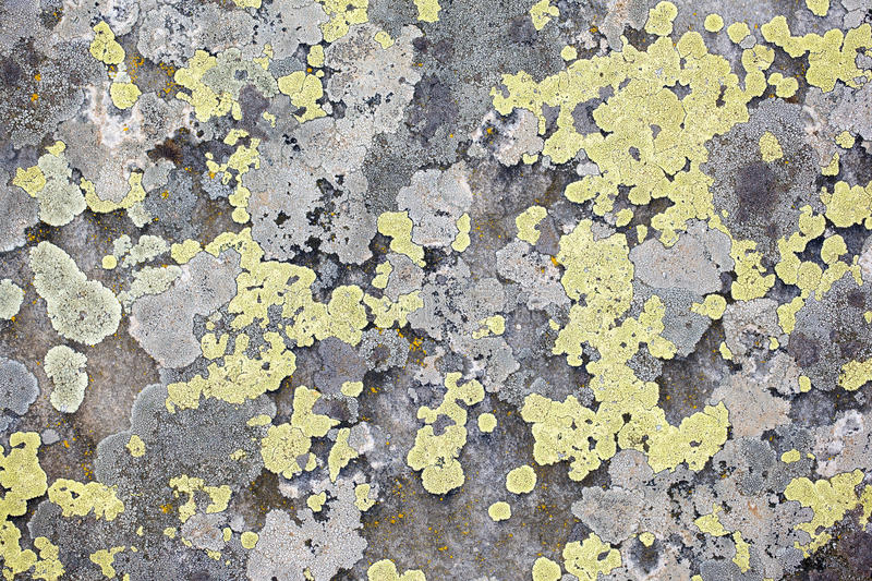 Download Rock background stock image. Image of vintage, abstract - 14986841