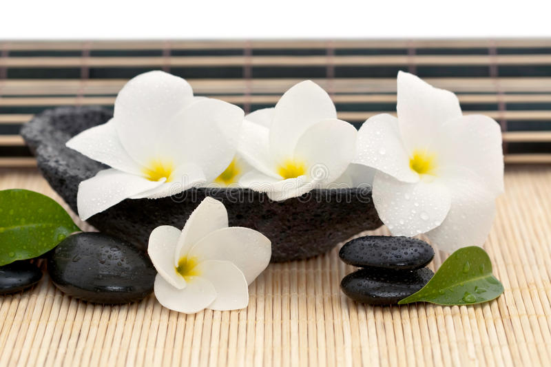 Rock bowl with frangipani royalty free stock photography