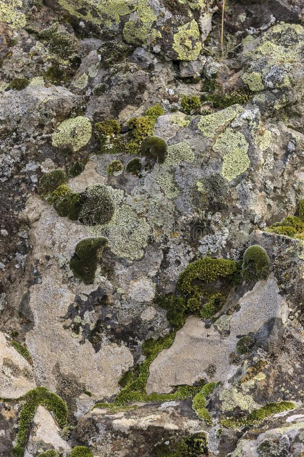 Rock covered with moss and lichen stock image