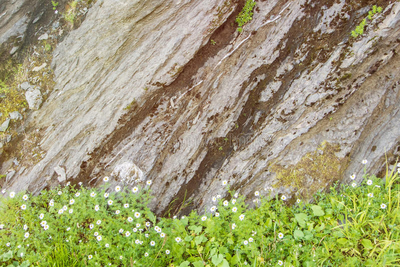Rock cut texture, green alpine grass and little white flowering royalty free stock photos