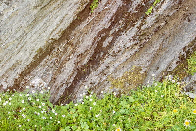 Rock cut texture, green alpine grass and little white flowering stock image
