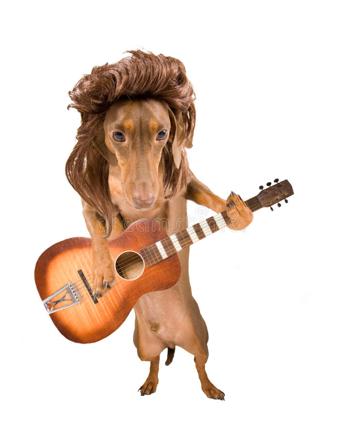 Download Rock dog stock photo. Image of furry, dachsund, guitar - 12293398