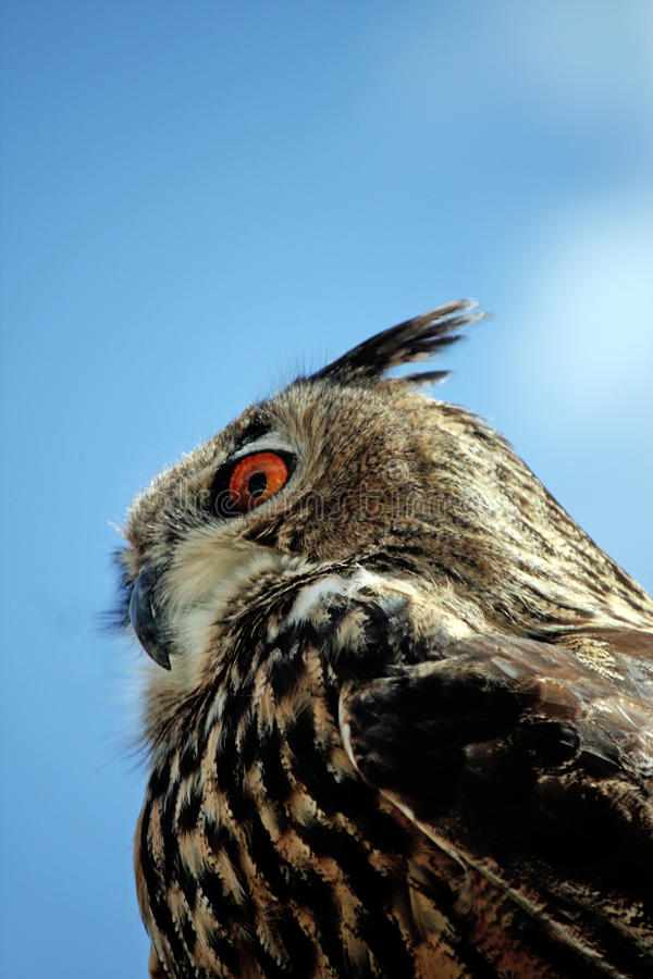 Rock Eagle-Owl Royalty Free Stock Images
