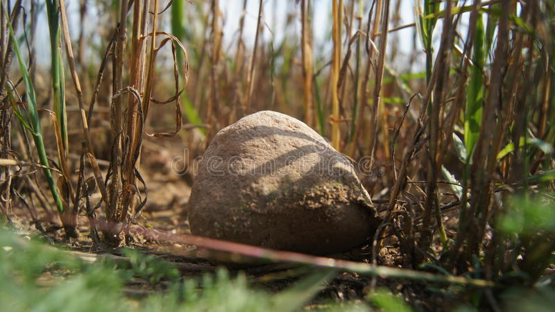 Rock in field stock photography