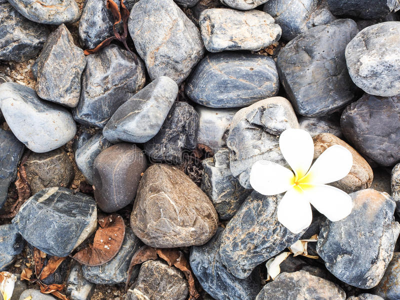 Rock and flower royalty free stock image