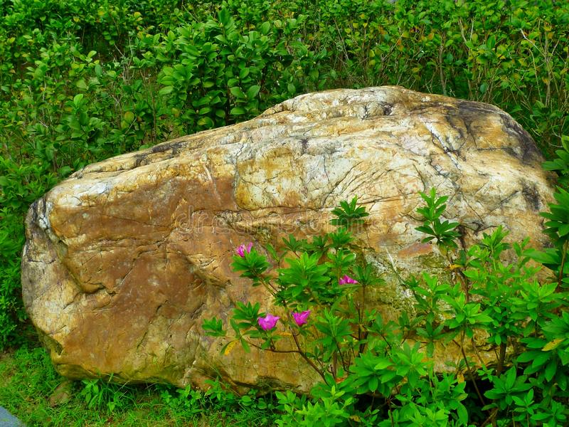 Rock and flowers royalty free stock images
