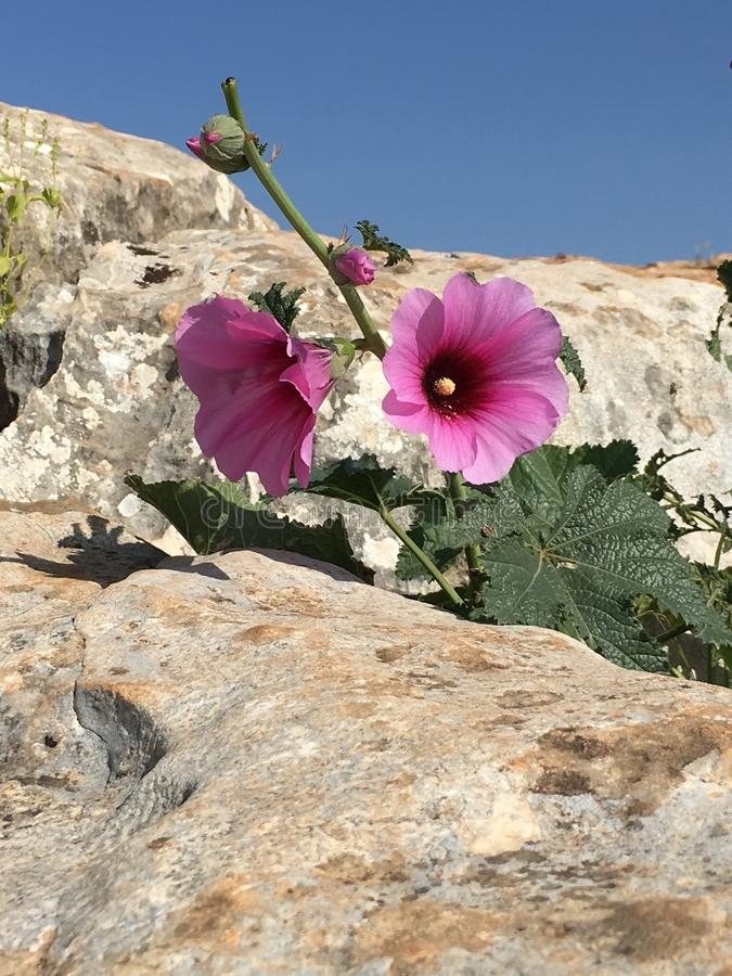 Rock flowers stock photography