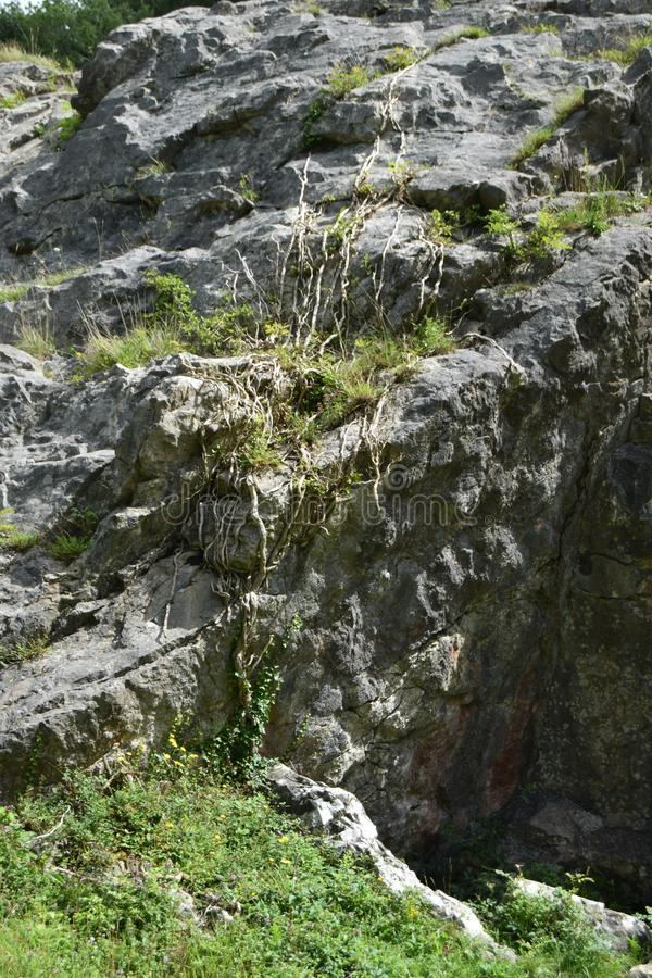 Rock formation, Mendip hills. A rock formation with climbing plant, Burrington Combe, Mendip hills stock photography