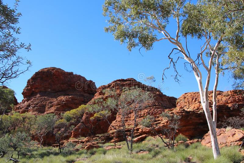 Rock formation at the Kings Canyon in Australia royalty free stock images