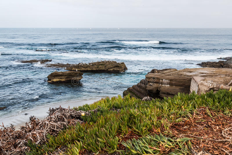 Rock formations and Iceplant in La Jolla, California royalty free stock image