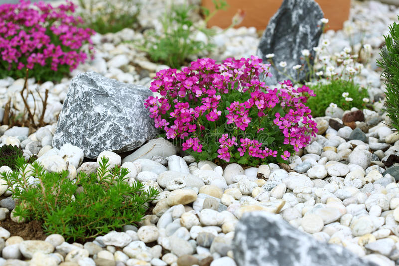 Rock garden. Beautiful rock garden cultivated roof gardening stock images