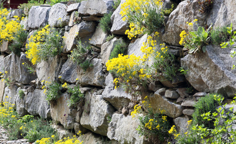 Rock garden or a garden wall. Of granite rocks and planted perennials that do not require a lot of water and soil for growth. Rockery suitable for sunny stock photo