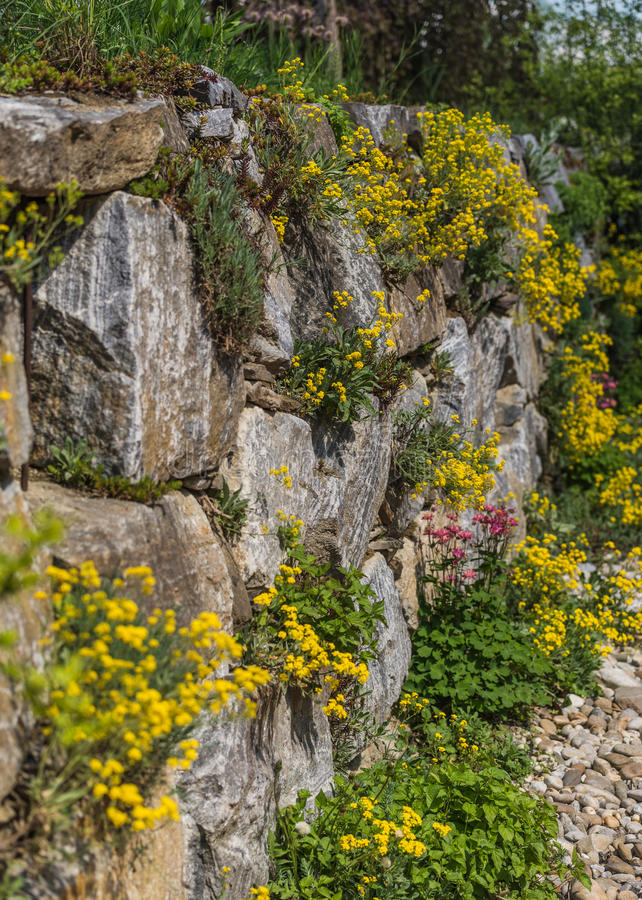 Download Rock garden stock photo. Image of wall, botany, growing - 83716208