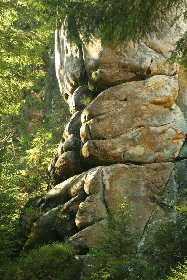 Rock i mist av skogen royaltyfri foto