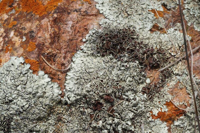 Rock and Moss Textures stock photos