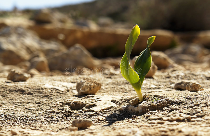 Rock Plant stock image