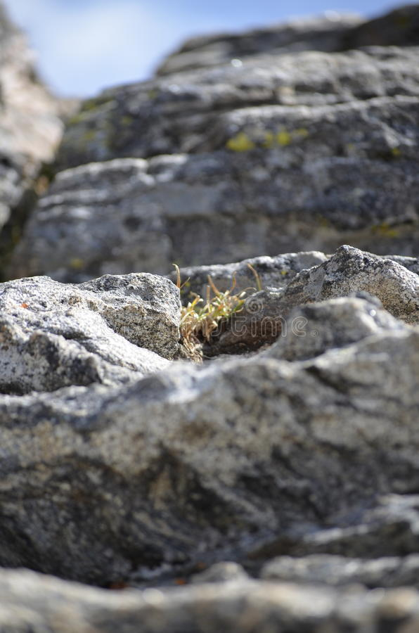 Rock and Plant royalty free stock image