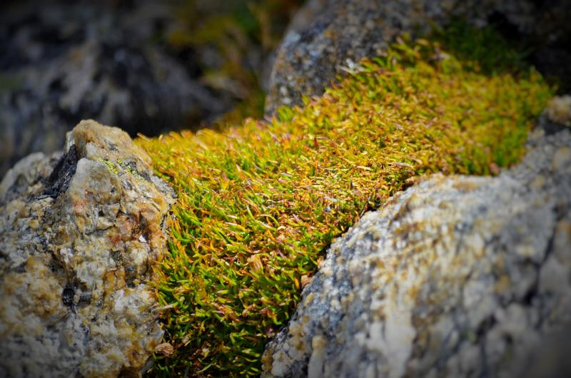 Rock and Plant stock photography