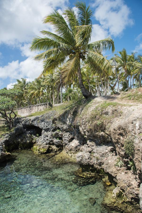 Rock Pools and Coconut Palms stock photography