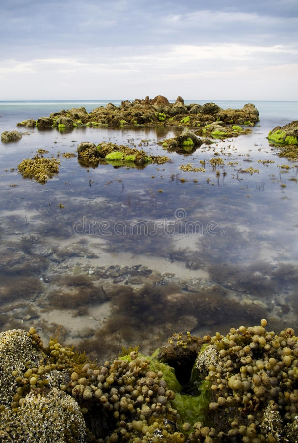 Rock pools with time-lapse water. Rock pools with various sea plants and smooth water stock photo