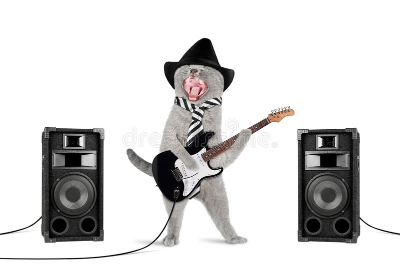 Rock star cat stock image